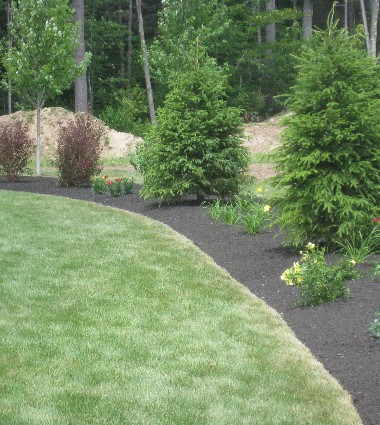 J. Martin Landscaping Tree and Perennial Mulched Border